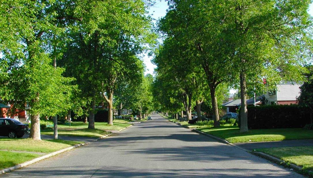 TreeLinedStreet